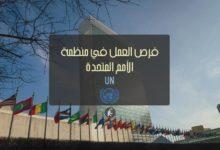 فرص-العمل-في-منظمة-الأمم-المتحدة-UN